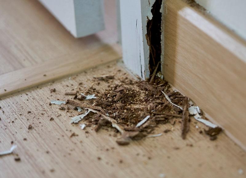 diy-termite-treatment